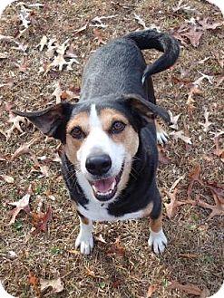 Hound (Unknown Type) Mix Dog for adoption in Ravenel, South Carolina - Elvis