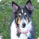 Adopt A Pet :: Callie (Adoption Pending)