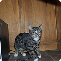 Adopt A Pet :: Ninja - Ridgway, CO
