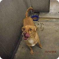 Adopt A Pet :: PISTACHIO - Oroville, CA