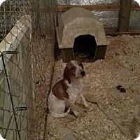 Adopt A Pet :: Tootsie - Rockville, MD