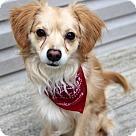 Adopt A Pet :: Travis *Has Application*