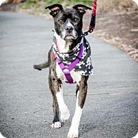 Adopt A Pet :: Sunshine - Richmond, VA