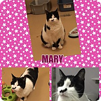 Adopt A Pet :: Mary - Goshen, NY