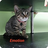 Adopt A Pet :: Emotion - Muskegon, MI