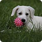 Adopt A Pet :: Laverne