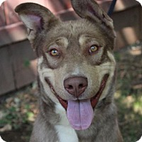 Adopt A Pet :: Bryce Dog • - Red Bluff, CA