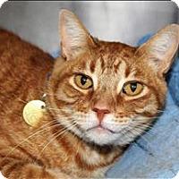 Adopt A Pet :: Ketten - San Luis Obispo, CA