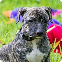 Adopt A Pet :: Erin - Bradenton, FL