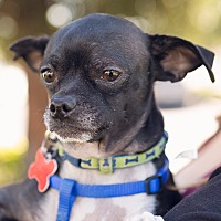 Adopt A Pet :: Bruno - Oakley, CA