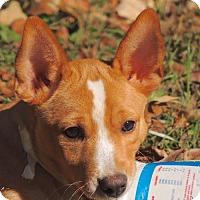 Adopt A Pet :: Gordon (VA) - Virginia Beach, VA