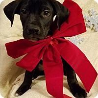 Adopt A Pet :: James (James MD-DE) - Newark, DE