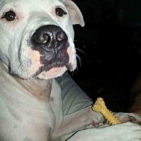 Adopt A Pet :: Domino - West Palm Beach, FL