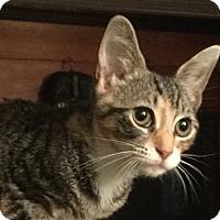 Adopt A Pet :: Harley - Durham, NC