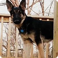 Adopt A Pet :: Talaus - Woodinville, WA
