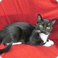Adopt A Pet :: Rosie - Richland, MI