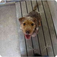 Adopt A Pet :: Scrappy - Winter Haven, FL