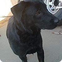 Adopt A Pet :: Izzie - Only $75 adoption fee! - Litchfield Park, AZ