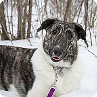 Adopt A Pet :: Mocha - Saskatoon, SK