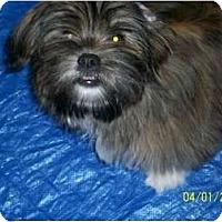 Adopt A Pet :: Domino - Richmond, VA