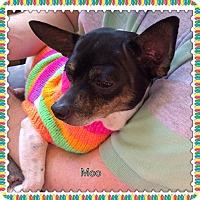 Adopt A Pet :: Moo - S. Pasedena, FL