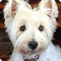Adopt A Pet :: Bonnie - Frisco, TX
