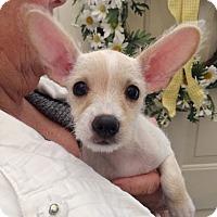 Adopt A Pet :: ALANNAH - Hurricane, UT