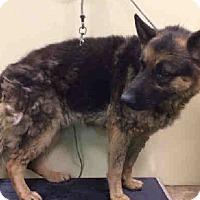 Adopt A Pet :: JOE - Tully, NY