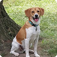 Adopt A Dog Davenport Iowa