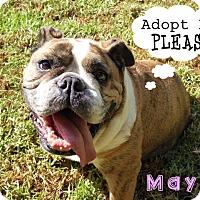 Adopt A Pet :: Maya - Santa Ana, CA