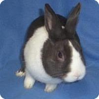 Adopt A Pet :: Hans - Woburn, MA