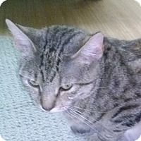 Adopt A Pet :: Sandimali-Green-Eyed  Love'14 - New York, NY
