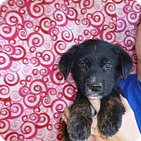 Adopt A Pet :: Tanner - Oviedo, FL
