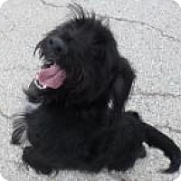 Adopt A Pet :: Raven - Lockhart, TX