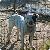 Adopt A Pet :: Abbey - Tonopah, AZ