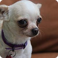 Adopt A Pet :: Juanita - tampa, FL