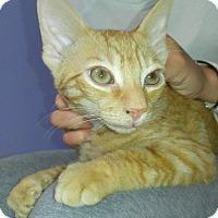 Adopt A Pet :: BUTCH - Cleveland, TN