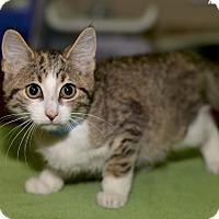 Adopt A Pet :: Marco - Medina, OH