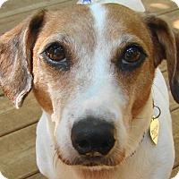 Adopt A Pet :: Lola - St Louis, MO