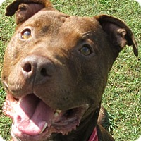 Adopt A Pet :: Drake - Port Jervis, NY