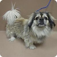 Adopt A Pet :: Alou - Reno, NV