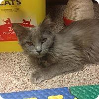 Adopt A Pet :: Grace - Portland, ME