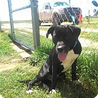 Adopt A Pet :: Alan - Denver City, TX