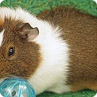 Adopt A Pet :: Waldo - Santa Barbara, CA