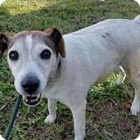 Adopt A Pet :: Samantha (Sam) - New Smyrna Beach, FL