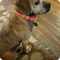 Adopt A Pet :: Murphy - Whitehall, PA