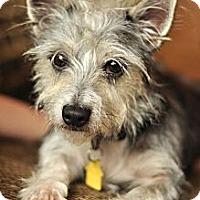 Adopt A Pet :: Asher - Omaha, NE