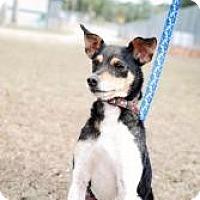 Adopt A Pet :: Sonoma - Crawfordville, FL