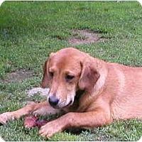 Adopt A Pet :: Karma - Albany, NY