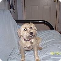 Adopt A Pet :: Sandy - Andrews, TX